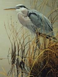 Great Blue Heron 500pc