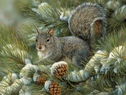 Gray Squirrel 275pc