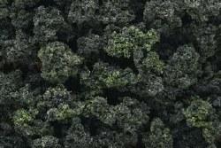 Bushes Clump Foliage Forest Blnd