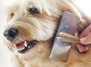 Dog Grooming at Kinsealy Pet Store