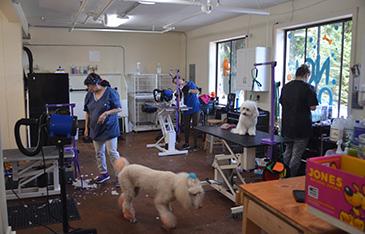 Grooming facility