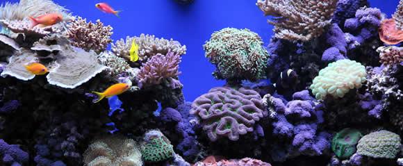 Showroom Aquariums