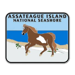 Assateague Island Survivor Pin