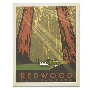 Redwood National Park Classic Travel Poster