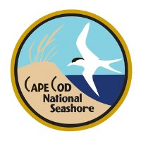 Golden Cape Cod Pin