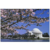 Thomas Jefferson Memorial Cherry Blossom Magnet