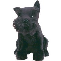 FDR's Dog Fala the Scottish Terrier