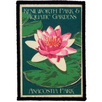 Kenilworth Park and Aquatic Gardens Water Lily Patch