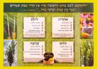 Laminated Sukkah Poster Arba Minim