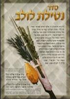 Seder Netilas Lulav Laminated Sukkah Poster