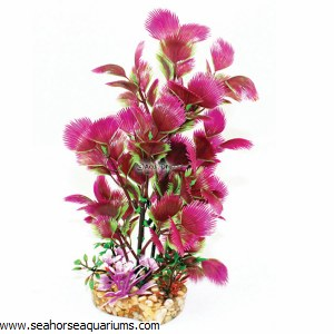 Aquaone Purple Hottonia Med
