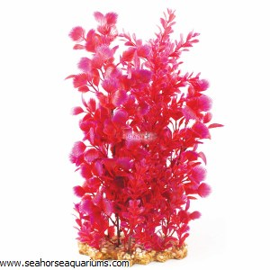 Aquaone Pink Hottonia XL
