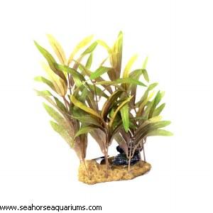 Green Ammania 15cm
