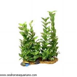 Green Rotala L/Scape XL 33cm