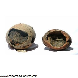Eggs of Dinosours