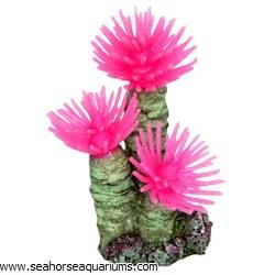 Pink Tube Worm Anemone
