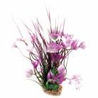 Aquaone Purple Villarsia Med