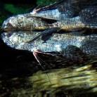 Misc. Fish