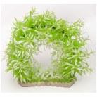 Plant Green & White Arch