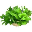 Green Large Plant  Base