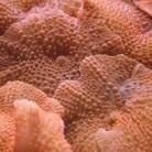 Red Mushrooms