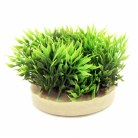 Sydeco Green Moss 6cm