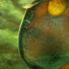 Shark-Egg