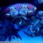 Pompom anemone crab