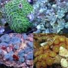 Nano Coral Pack 1