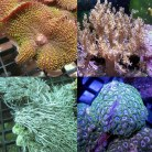 Soft Coral Pack 1