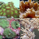Soft Coral Pack 2
