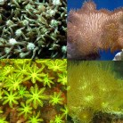 Soft Coral Pack 3