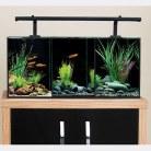 Betta Trio Aquarium 32 Litre