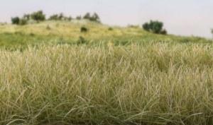 Woodland Scenics Other WFS619 4mm Static Grass Light Green