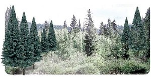 "Woodland Scenics Other WTR1587 2""-4"" Ready Made Blue Spruce Value Pack (18/Pk)"
