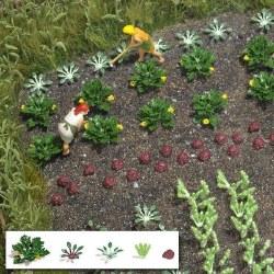 Vegetable and Salad