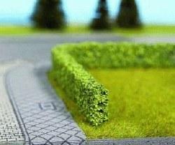 Light Green Hedgerow