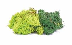 Lichen - Green Mix