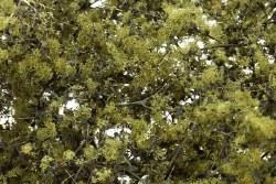 Fine Leaf Foliage Olive Green