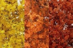Fine Leaf Foliage Fall Mix