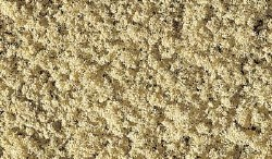 Coarse Turf Yellow Grass
