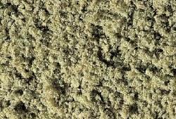 Coarse Turf Burnt Grass
