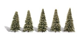 5 Blue Needle Trees Spruce 2-3.5in 5-9cm