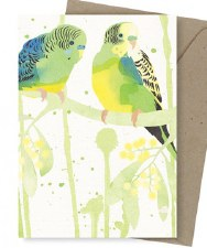 Greeting Card - Bush Budgies