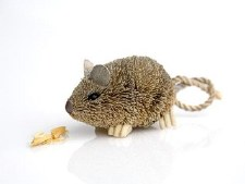 Animal Field Mouse