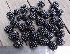Blackberry, Black Satin, 3 gal