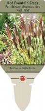 Grass, Red Head Ftn, 1g