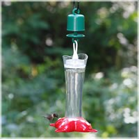 Bird Feeder, Hummingbird