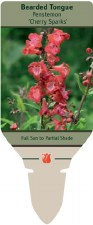 Penstemon, CherrySparks 1or2g