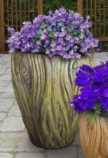 Planter, Banyan, Medium